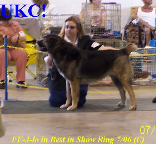 1st UKC Grand Champion